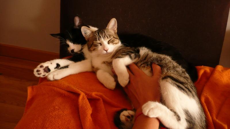 3 chatons, 2 filles, 1 mâle, 3, 5 mois - Page 6 P1020715