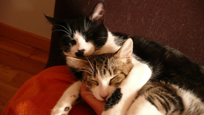 3 chatons, 2 filles, 1 mâle, 3, 5 mois - Page 6 P1020716