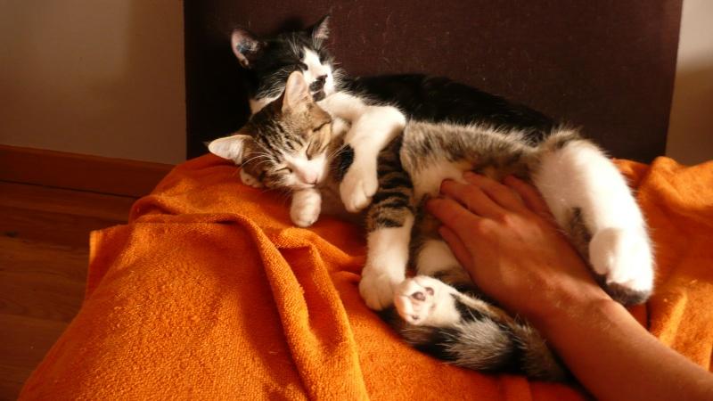 3 chatons, 2 filles, 1 mâle, 3, 5 mois - Page 6 P1020717