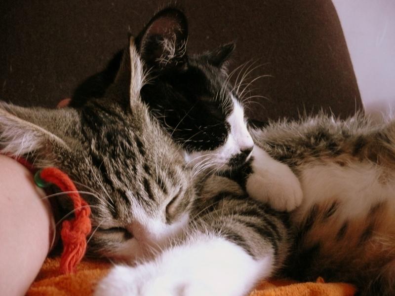 3 chatons, 2 filles, 1 mâle, 3, 5 mois - Page 6 P1020718