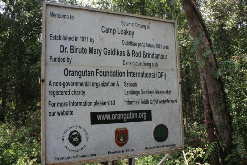 [Indonésie] - Camp Leakey (Kalimantan, Tenggah), centre de recherche sur l'oran-outang 19874510