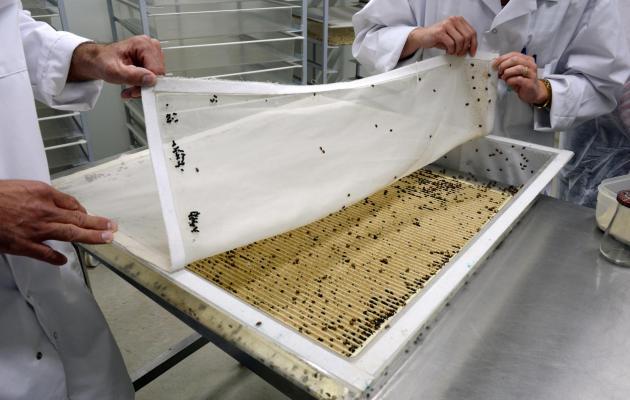 Dans la Drôme, une fabrique géante d'insectes utiles Part-p11