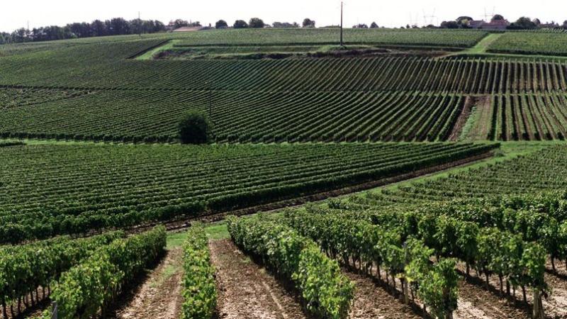 Le vignoble bordelais durement touché par les orages Phof8a10