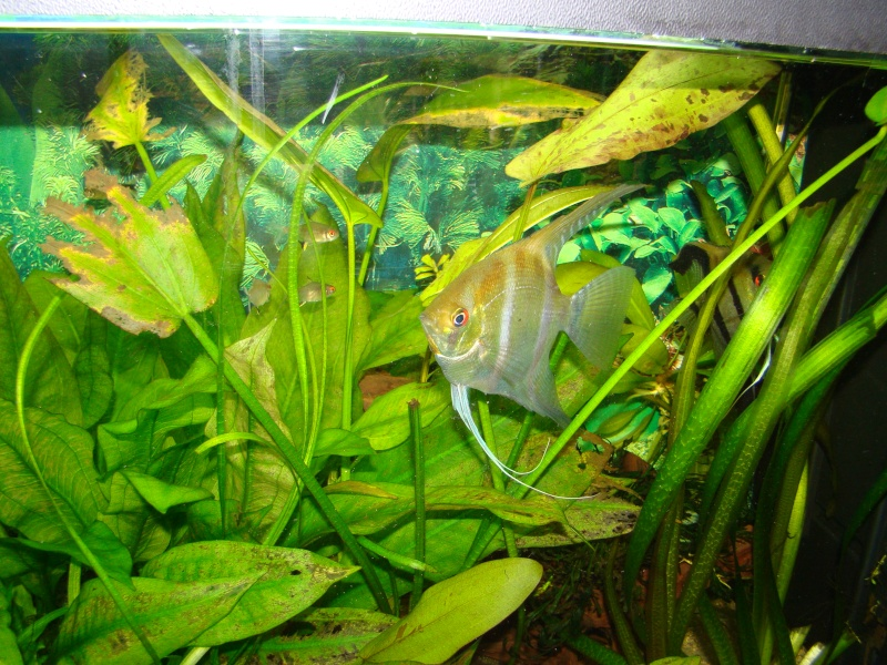 mes aquariums Dsc00112