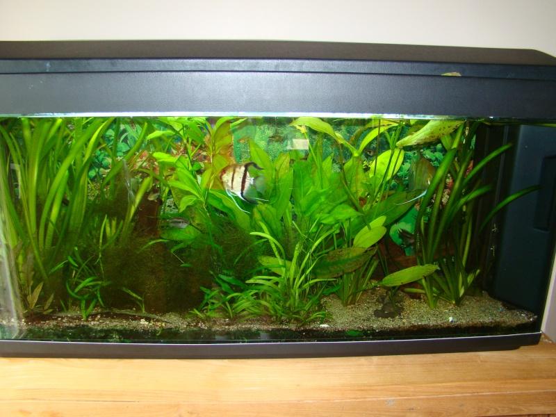mes aquariums Dsc00311