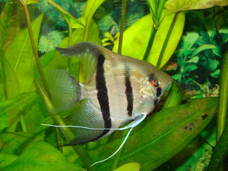 mes aquariums Dsc00312