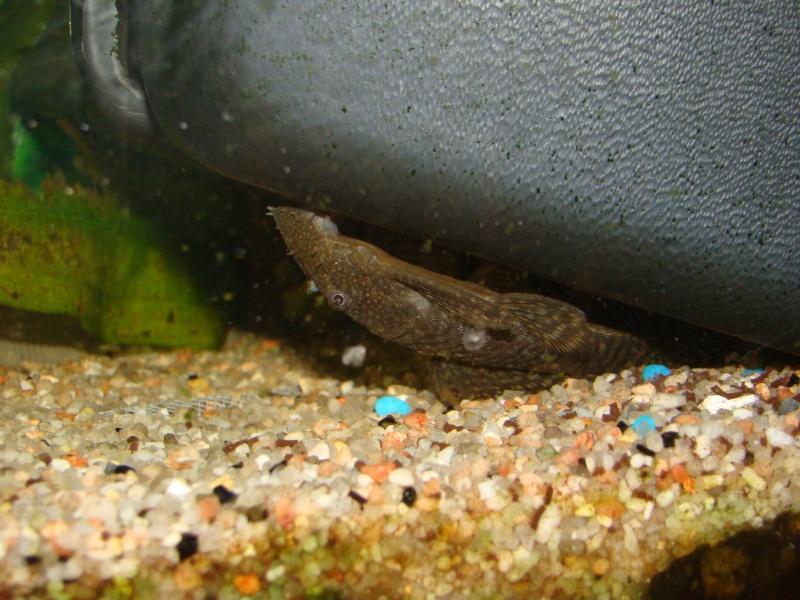 mes aquariums Dsc00314