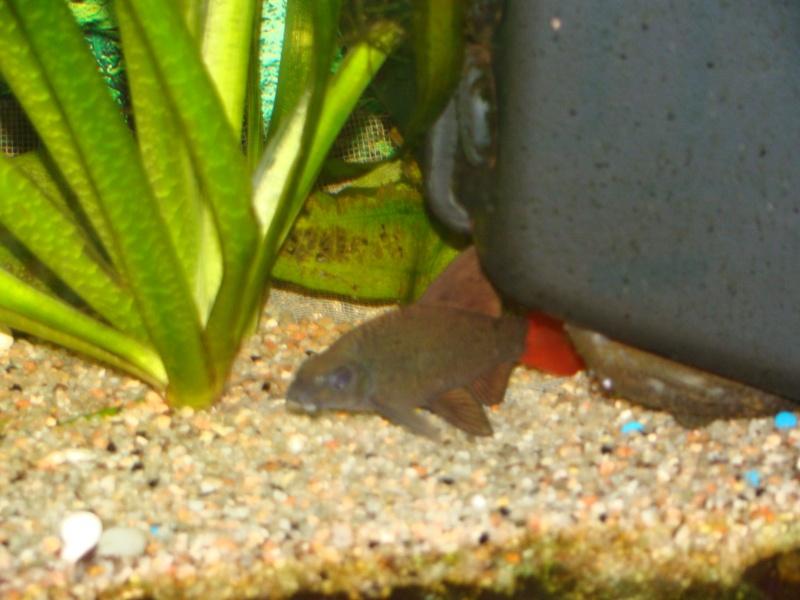 mes aquariums Dsc00315