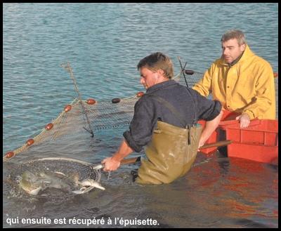 Pourquoi personne ne pêche le Louroux Le_pos12
