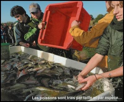 Pourquoi personne ne pêche le Louroux Poisso12