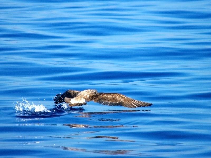 Sorties Baleines et dauphins de Méditerranée. - Page 4 Imgp0111