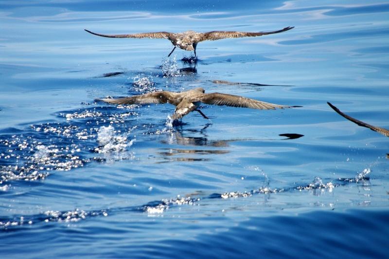 Sorties Baleines et dauphins de Méditerranée. - Page 4 Imgp0212