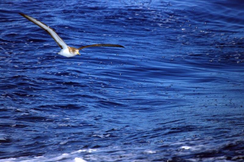 Sorties Baleines et dauphins de Méditerranée. - Page 3 Imgp0221