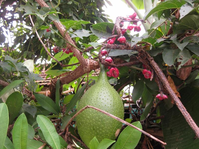 Fruit a identifier Img_7910