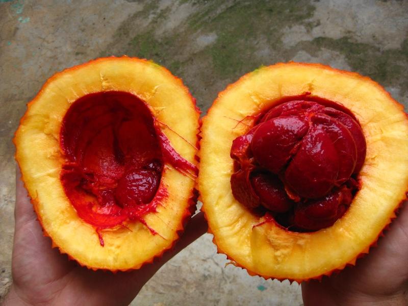 Fruit a identifier Img_8115
