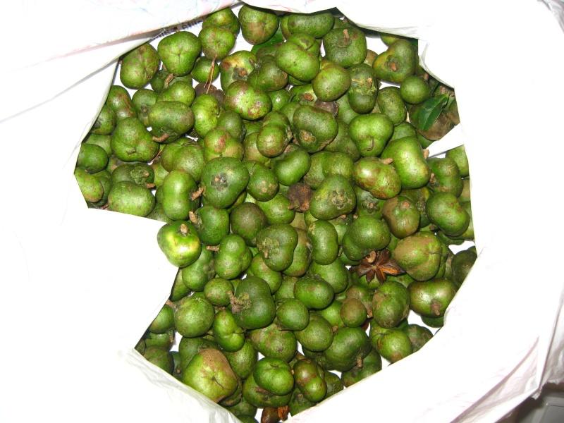 [Theaceae] Camellia sinensis Img_8120