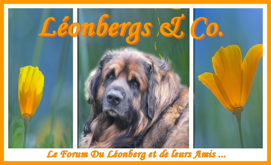 Léonbergs & Co.