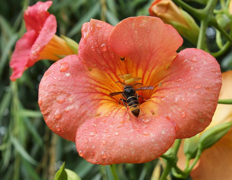 Frelon en fleur!!!! Img_0315