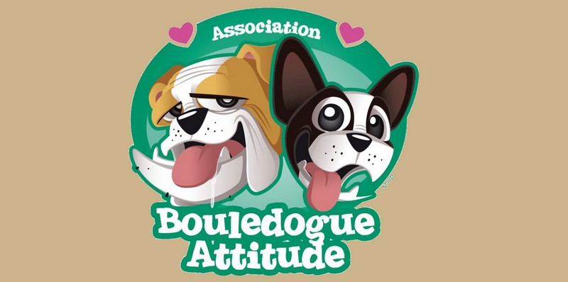 Bouledogue Attitude