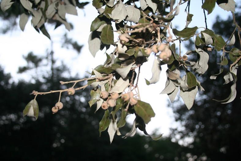 [Atelier plantes sauvages ] Aide à l'identification des plantes Img_8310
