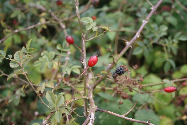 [Atelier plantes sauvages ] Aide à l'identification des plantes Img_8614