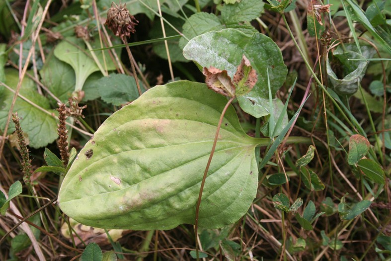 [Atelier plantes sauvages ] Aide à l'identification des plantes Img_8621
