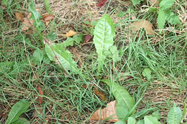[Atelier plantes sauvages ] Aide à l'identification des plantes Img_8622
