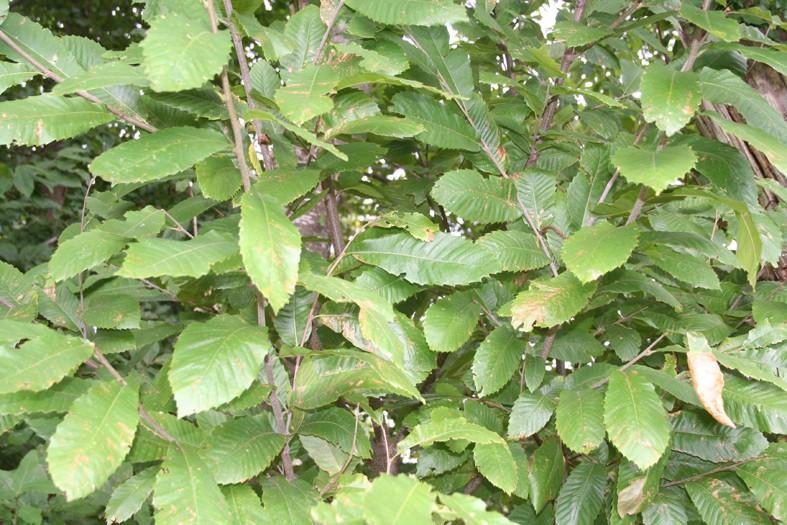 [Atelier plantes sauvages ] Aide à l'identification des plantes Img_8624