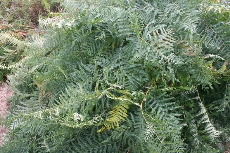 [Atelier plantes sauvages ] Aide à l'identification des plantes Img_8627