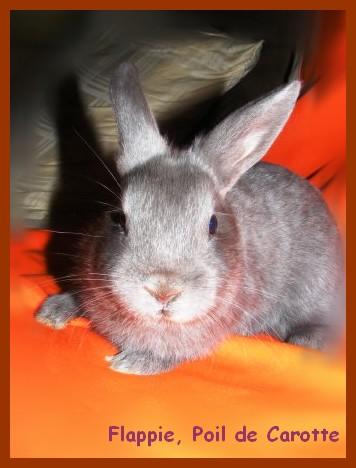 Flappie, née en novembre 2010 Babas_12