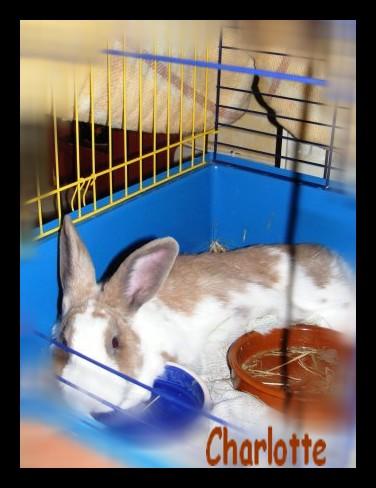 Charlotte,  lapine stérilisée, née en 2009 - Page 2 Fa_jan12