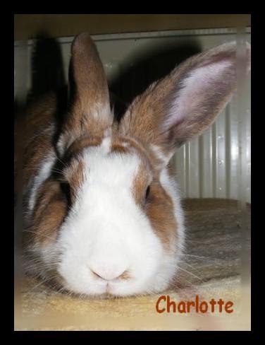 Charlotte,  lapine stérilisée, née en 2009 - Page 2 Fa_jan14