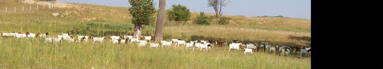 crescatorul de capre