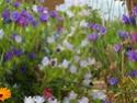 Maisons et hôtels à insectes pour le jardin le potager ..  Sam_0011