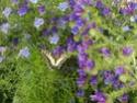 Maisons et hôtels à insectes pour le jardin le potager ..  Sam_0012