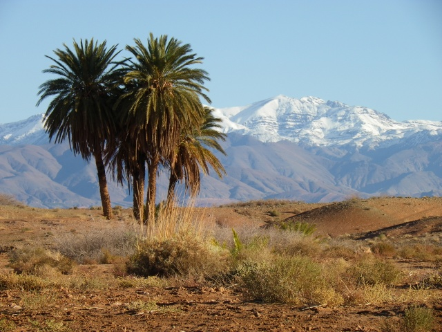 Oasis de Naga  Bivouac Rêve de l'Atlas Imgp8210