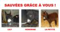 amis des bêtes, cliquez pour les animaux ! clicanimaux…  - Page 4 La_pet10