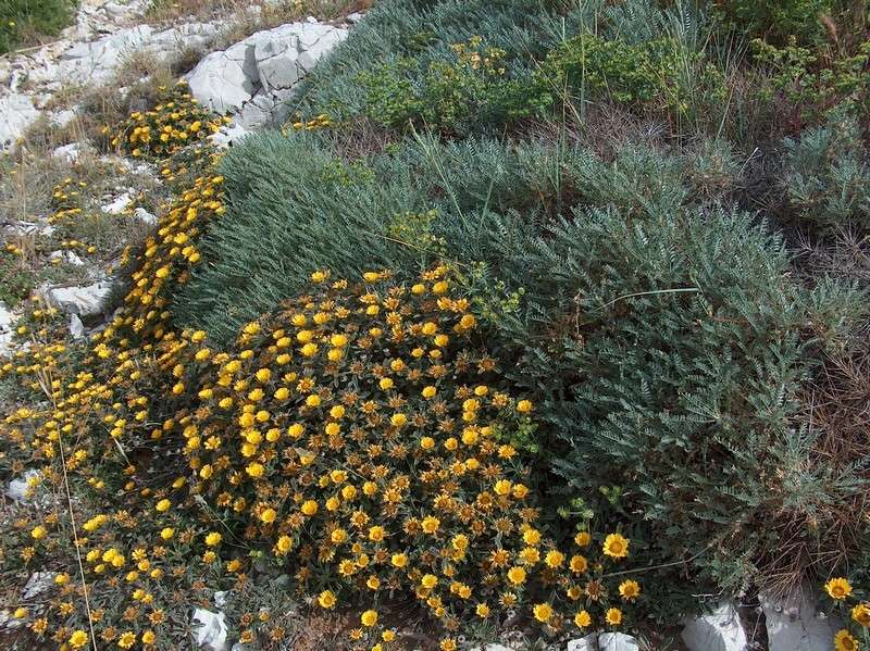 Une balade sur le mont Rose à Marseille Hpim9611