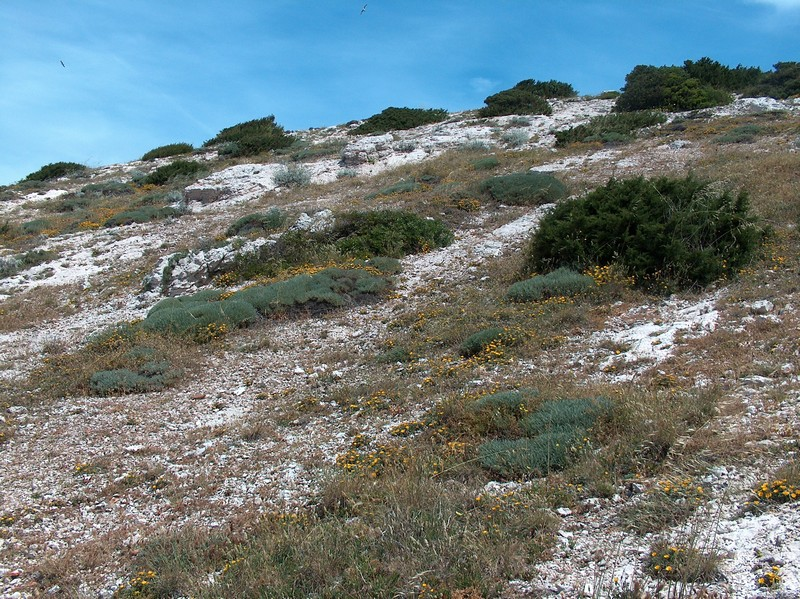 Une balade sur le mont Rose à Marseille Hpim9810