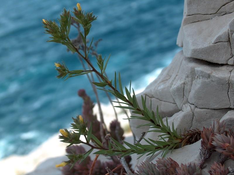 Une balade sur le mont Rose à Marseille Linum_10