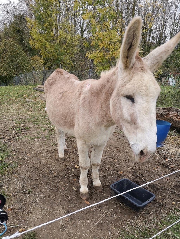 POTIRON - ONC âne né en 2001 - adopté en juin 2020 par Valérie Img_2020