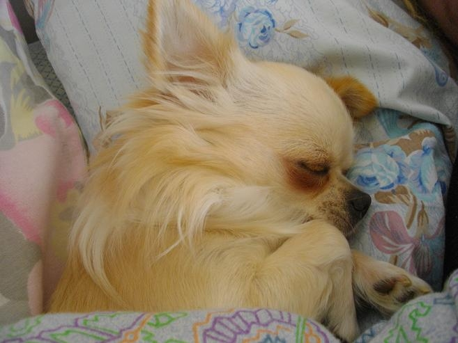 une vraie vie de chien Imgp1014