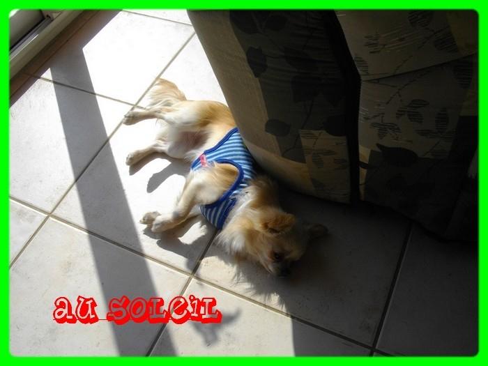 une vraie vie de chien Imgp1310