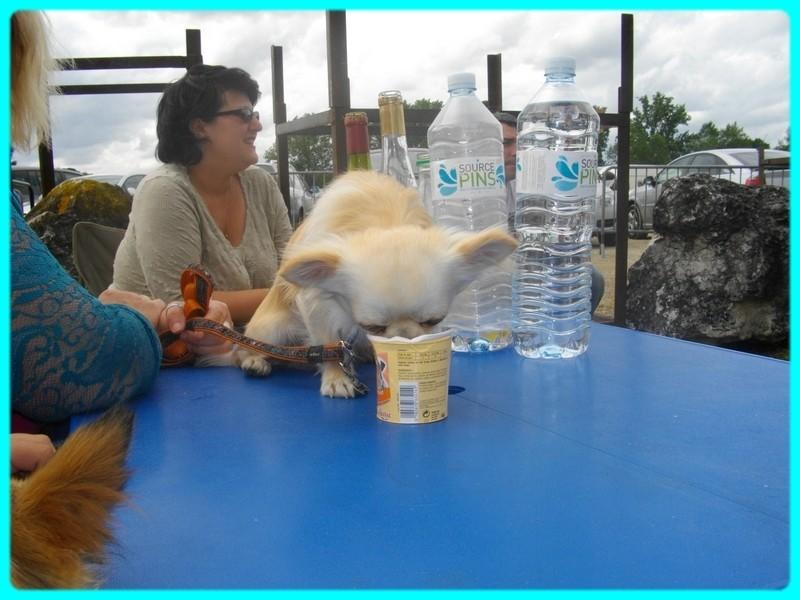 une vraie vie de chien Imgp2317