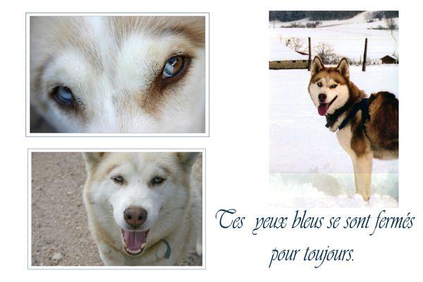 album photo  a tous nos loups rendu au paradis blancs Montag15