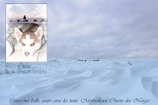 album photo  a tous nos loups rendu au paradis blancs Montag16