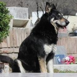 La fidélité sans limite du chien Un-chi10