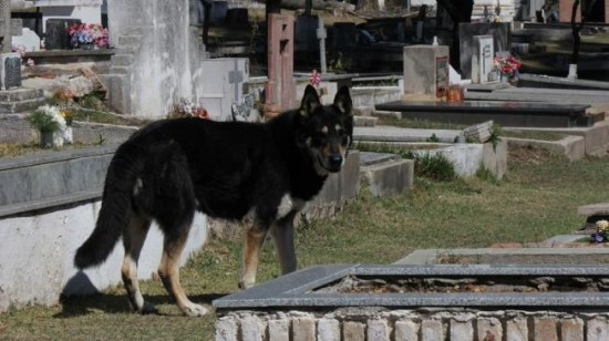La fidélité sans limite du chien Un-chi11