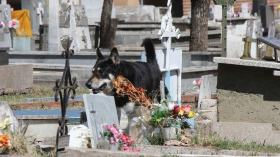 La fidélité sans limite du chien Un-chi12