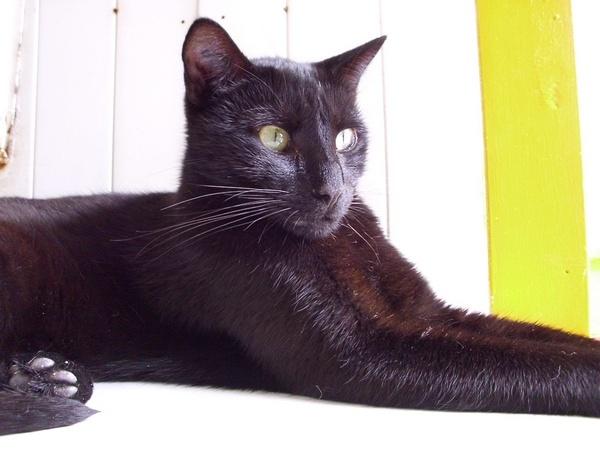 KEEPER (noir) Hpim0567